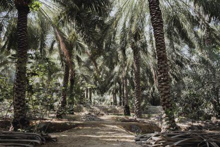 Qalat Dhaya date farm [2], Ras Al Khaimah
