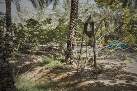 Date farm insect zapper