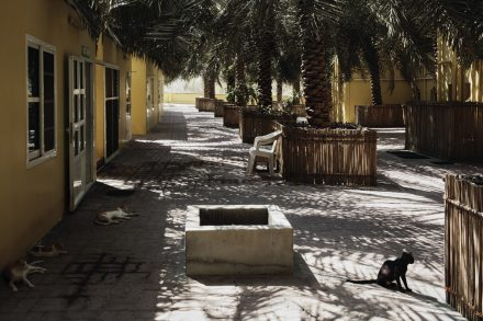 Qalat Dhaya Rest House yard shaded by date palms