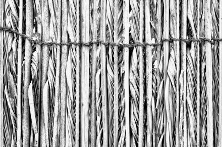 Date palm (barasti) fencing
